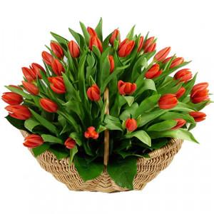 Корзина 51 красный тюльпан