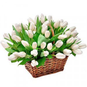 51 белый тюльпан в корзине