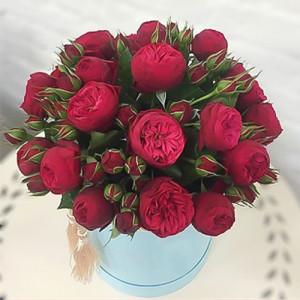 19 роз Ред Пиано в шляпной коробке