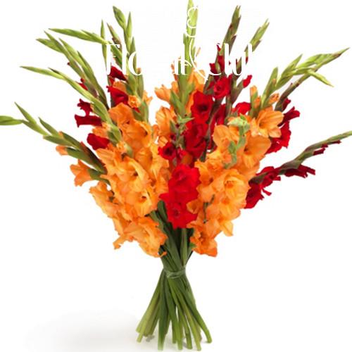 Букет 15 красных и оранжевых гладиолусов