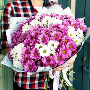 Букет 15 разноцветных хризантем Яркие моменты