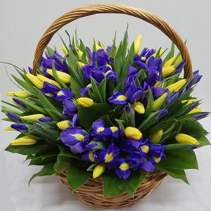 Корзина желтых тюльпанов и синих ирисов